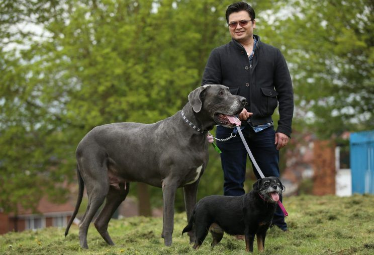 Balthazar, Danese gigante e Fifi, Patterdale Terrier, a spazzo col loro padrone Vinnie